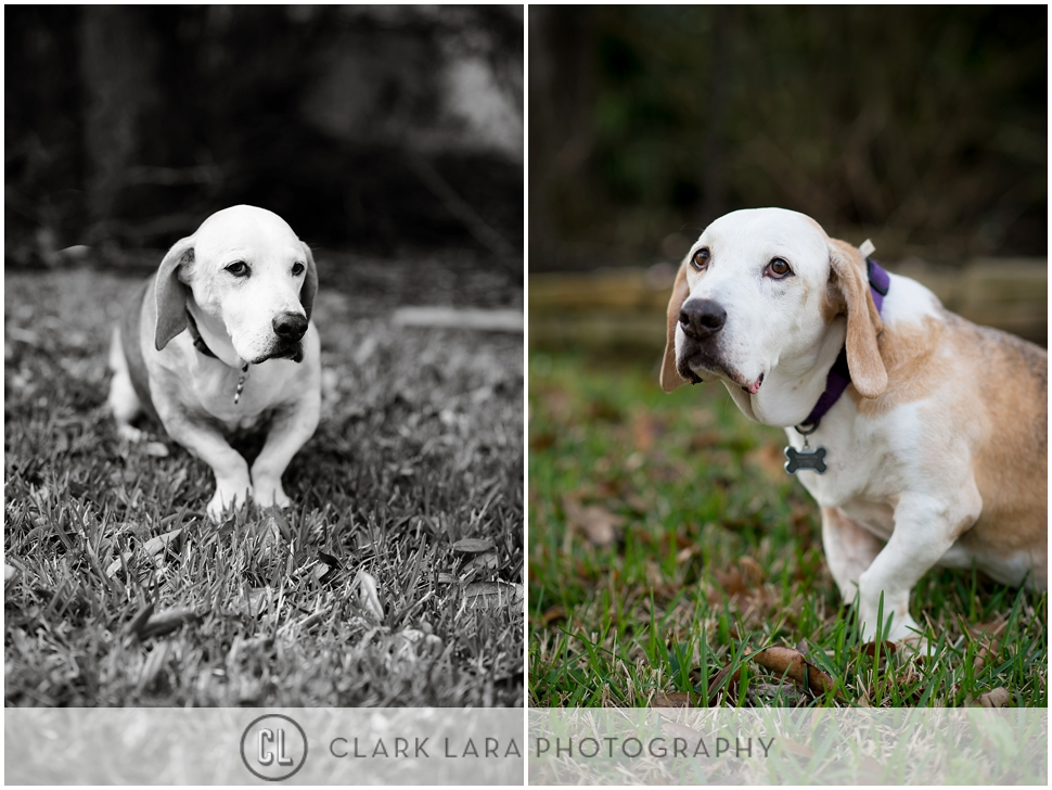 woodlands_family__pet_portrait_ECM_0002.jpg