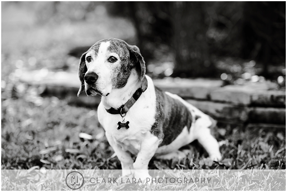 woodlands_family__pet_portrait_ECM_0006.jpg