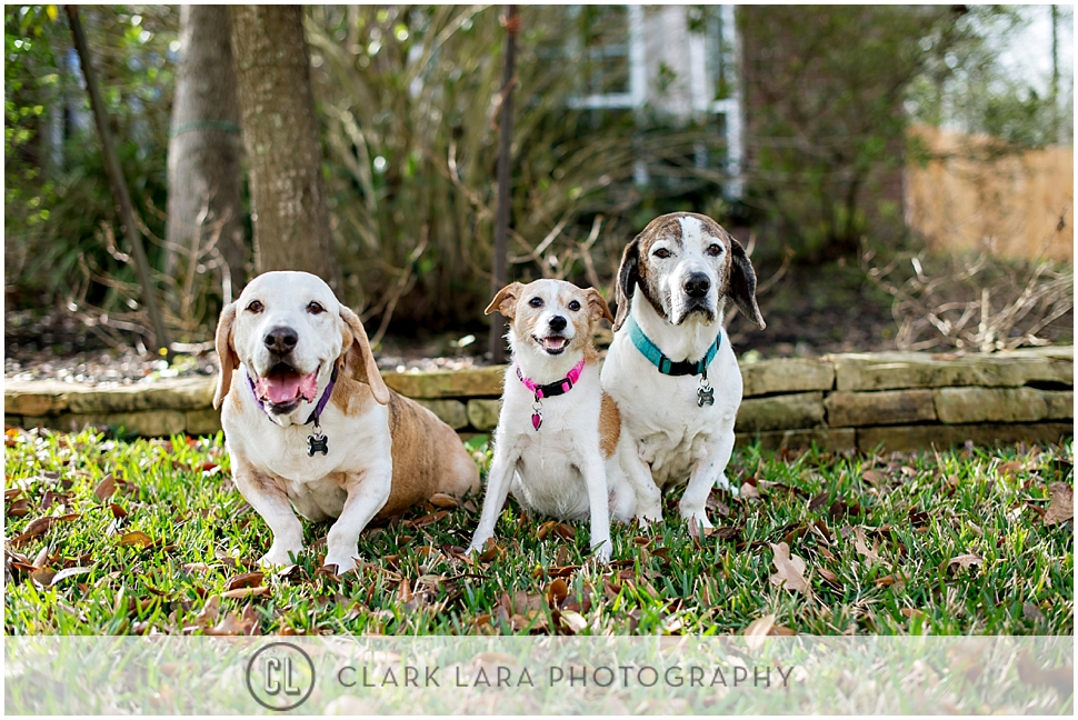 woodlands_family__pet_portrait_ECM_0008.jpg